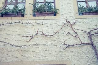 窓のある壁.jpg